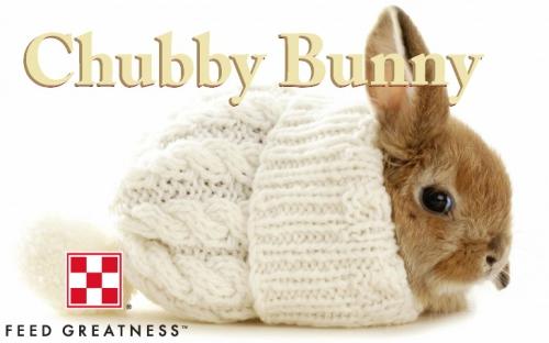Chubby Bunny by Purina