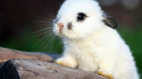 acwhc-angelcraft-crown-world-heritage-conservation-corpvs-crown-natural-wildlife-santuraies-and-marine-sancturaries-a-look-out-bunny
