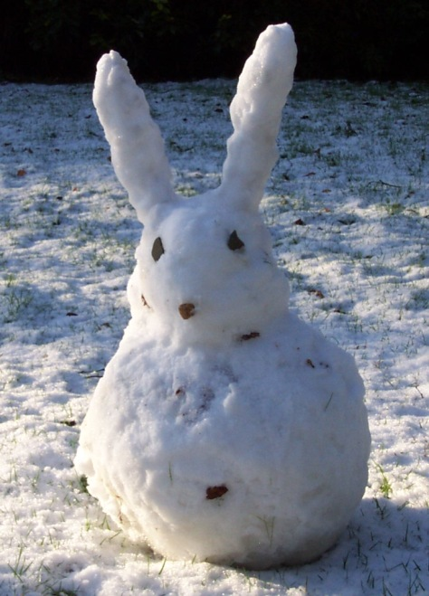 acwhc-angelcraft-crown-world-heritage-conservation-corpvs-crown-natural-wildlife-santuraies-and-marine-sancturaries-a-snow-bunny