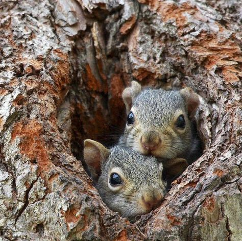 acwhc-angelcraft-crown-world-heritage-conservation-corpvs-crown-natural-wildlife-santuraies-and-marine-sancturaries-these-are-tree-trunk-pepper-squirrles