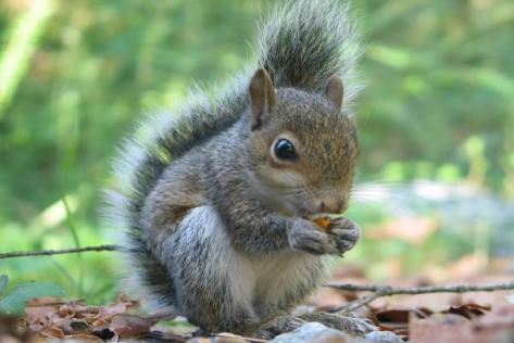 acwhc-angelcraft-crown-world-heritage-conservation-corpvs-crown-natural-wildlife-santuraies-and-marine-sancturaries-this-is-a-sneeky-squirrel